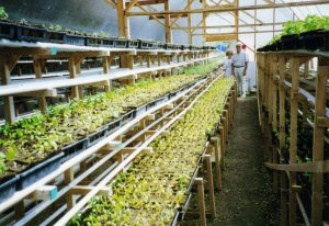 Young Living greenhouse
