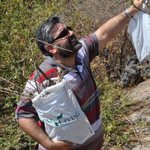 Dr. Mahmoud Suhail gathering gildeadensis branches