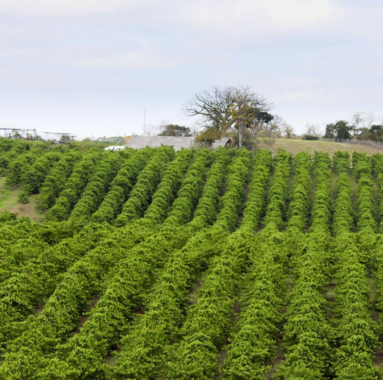 Ecuador Farm